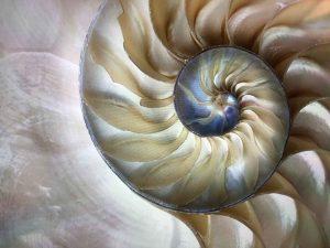 Muschel Hypnose